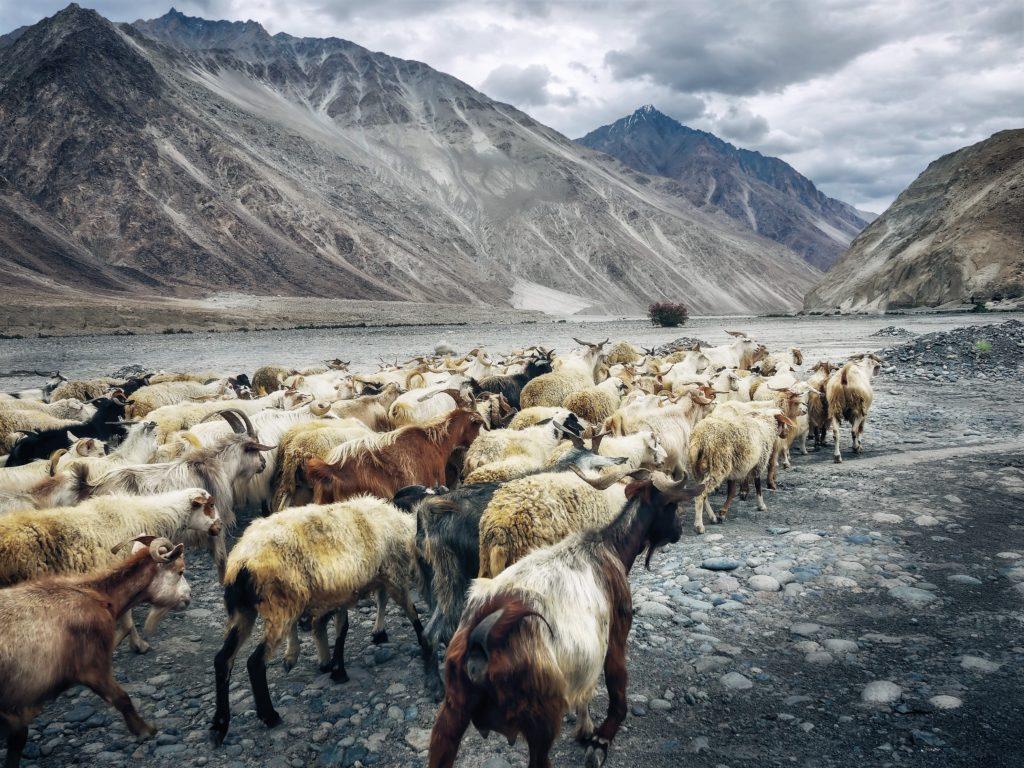 TOP 10 Länder: Export von Schafsfleisch
