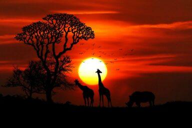 TOP10 Unternehmen Afrikas nach Umatzhöhe 2018