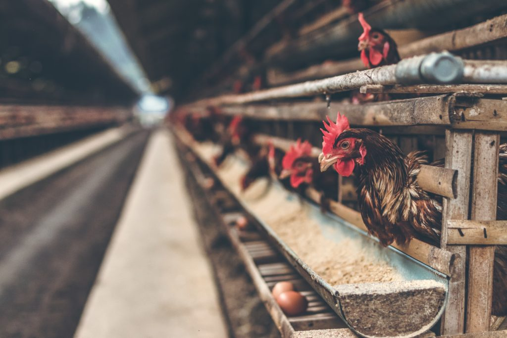 Hühnereiexporte nach Land