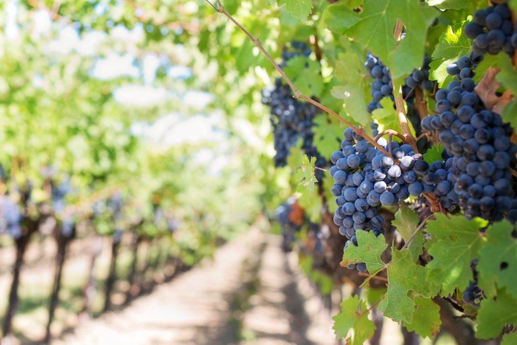 TOP10 Pays d'exportation de raisins