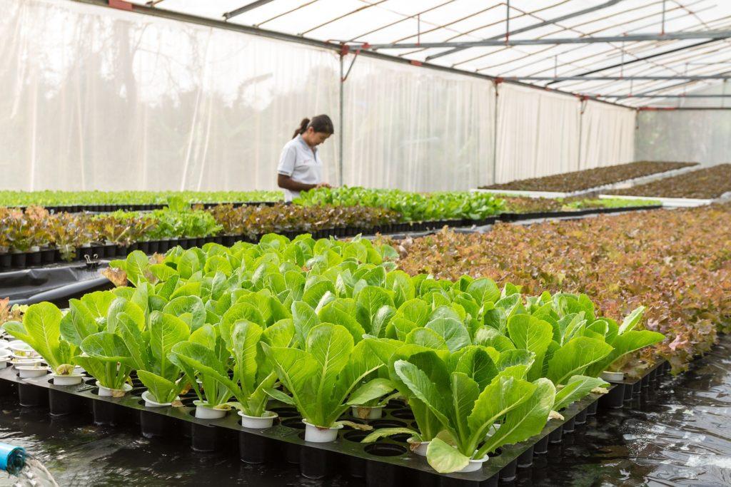 TOP10 Exportations de salade par pays et par valeur d'exportation