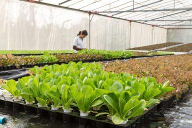 TOP10 Exporte von Salat nach Land und Ausfuhrwert