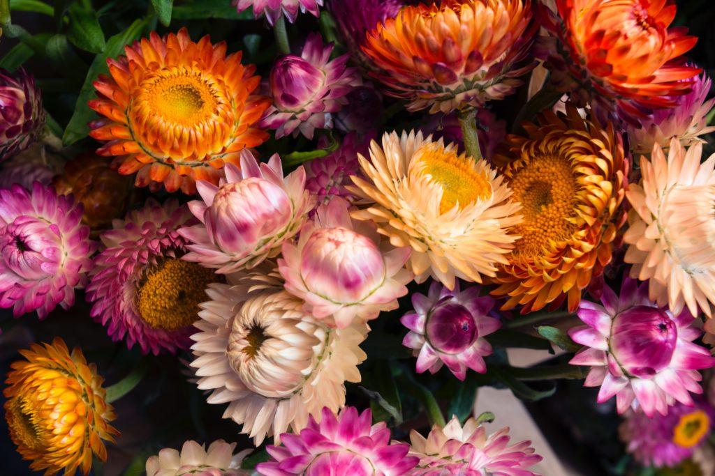 TOP10 Exportación de flores cortadas por tierra.