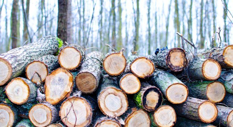 TOP10 Exportländer von Holz nach Exportwert