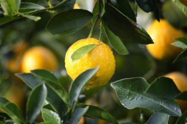 TOP10 Exportländer von Zitronen nach Ausfuhrwert